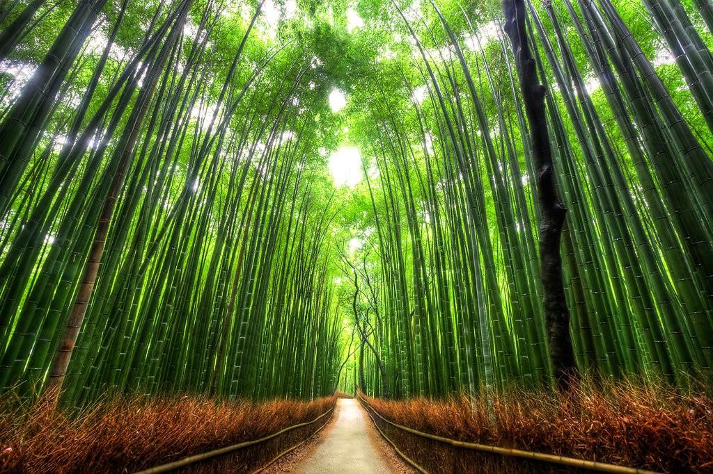 Tem tudo a ver com a atmosfera dos desenhos japoneses.
