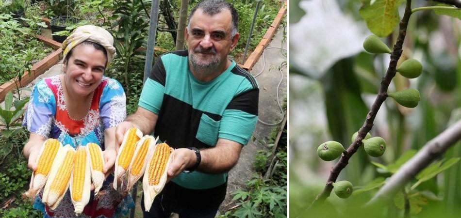 horta organica - To no Cosmos
