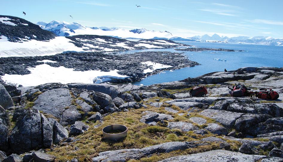 vegetation-antartic-TonoCosmos