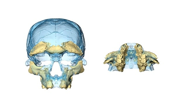 fosseis-homo-sapiens1