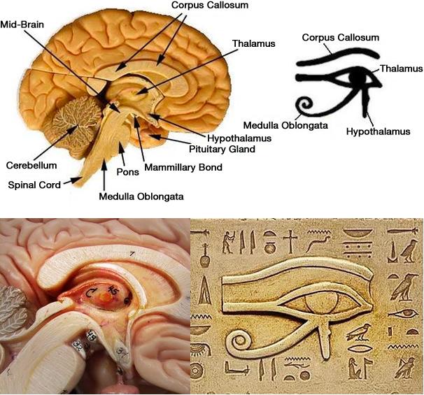 Risultati immagini per pineal gland egyptian symbol