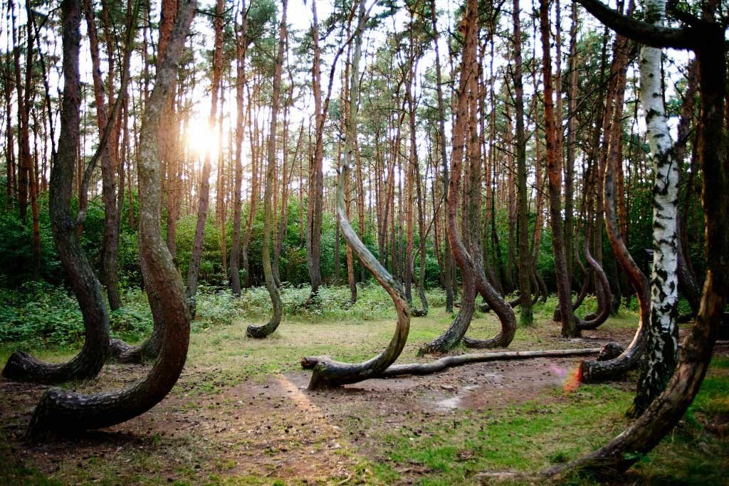 Hoia-Baciu-The-Mysterious-Forest-Interesting-Trees-Ghosts-Legends-1024x683